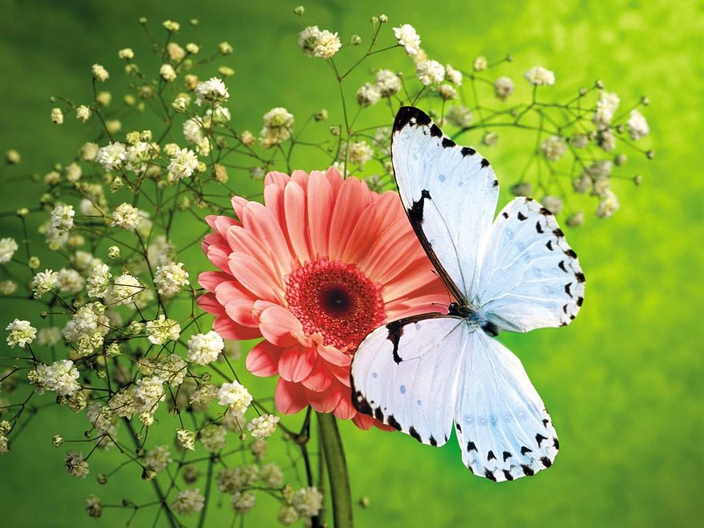Beautiful Flowers HD Wallpapers