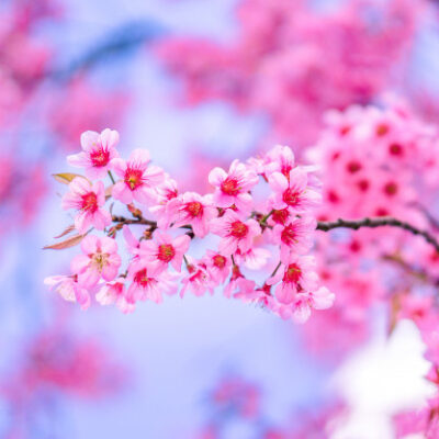 Beautiful pink flower HD wallpaper